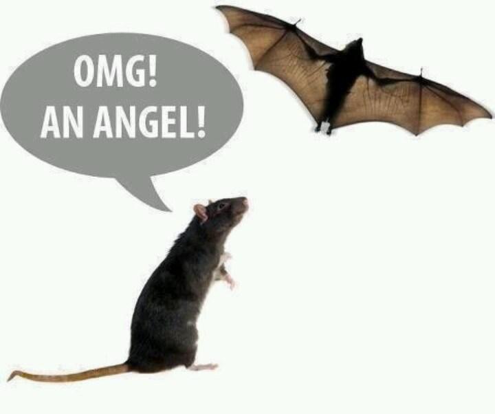 meme - Bat - OMG! AN ANGEL!