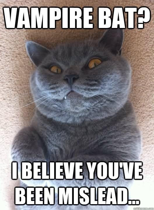 meme - Cat - VAMPIRE BAT? IBELIEVE YOUVE BEEN MISLEAD... auitemn.com
