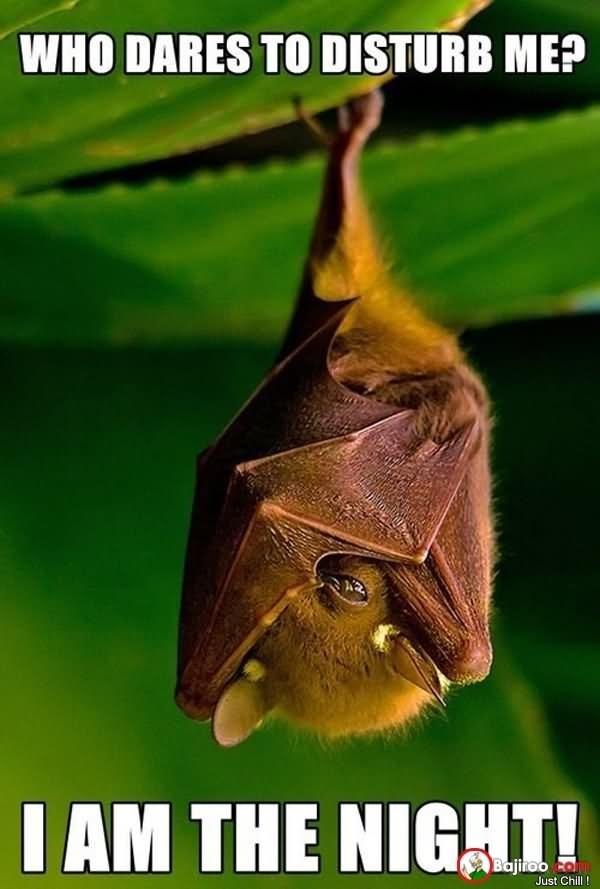 meme - Bat - WHO DARES TO DISTURB ME? IAM THE NIGT! Bajiroo com Just Chill!