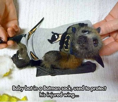 meme - Hand - Baby bat ina Batman sodk, used to protect his finfured wing.
