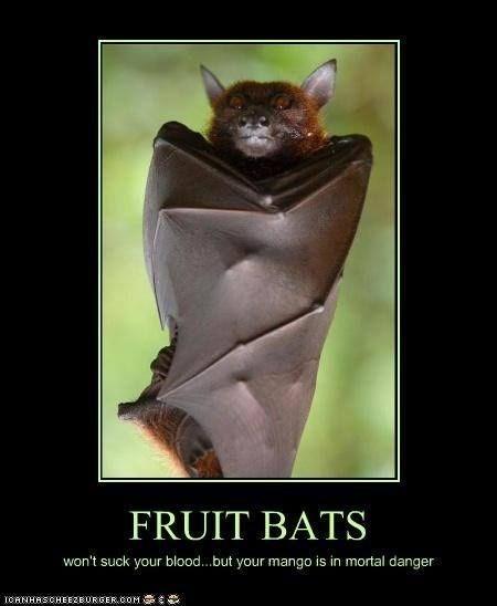 meme - Bat - FRUIT BATS won't suck your blood...but your mango is in mortal danger ICANHASCHEEZEURGERCOM