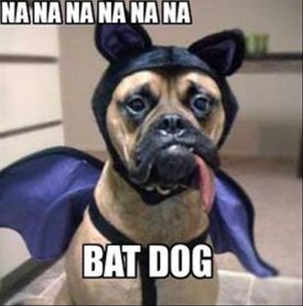 meme - Dog - NANA NA NA NA NA BAT DOG