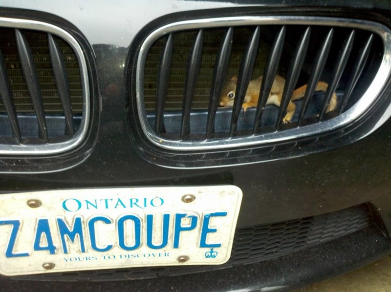Vehicle registration plate - ΟΝΤΑRIO Z4MCOUPE YOURS TO DISCOVER
