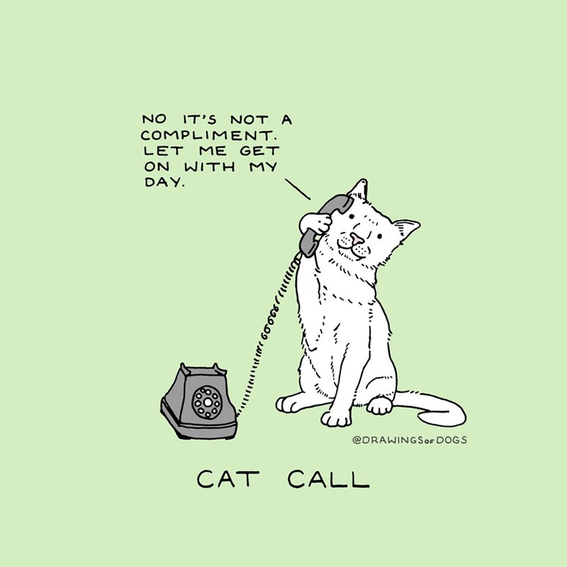 Image result for cat call
