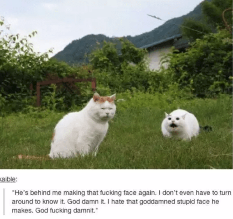 """Mammal - aible: """"He's behind me making that fucking face again. I don't even have to turn around to know it. God damn it. I hate that goddamned stupid face he makes. God fucking damnit."""