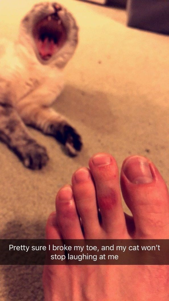 Cat - Pretty sure I broke my toe, and my cat won't stop laughing at me