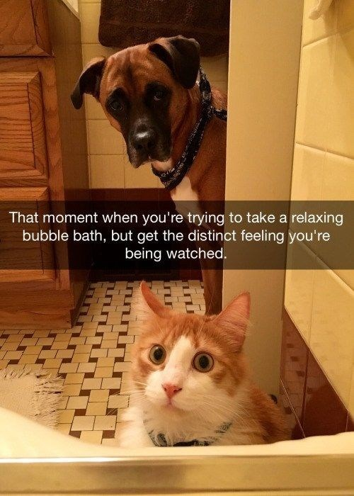 Cat - That moment when you're trying to take a relaxing bubble bath, but get the distinct feeling you're being watched.