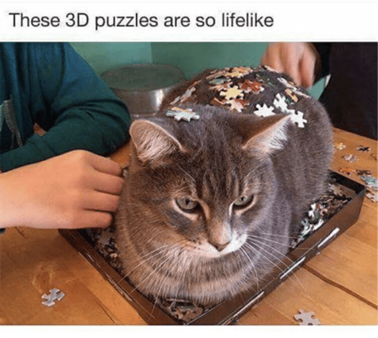 Cat - These 3D puzzles are so lifelike