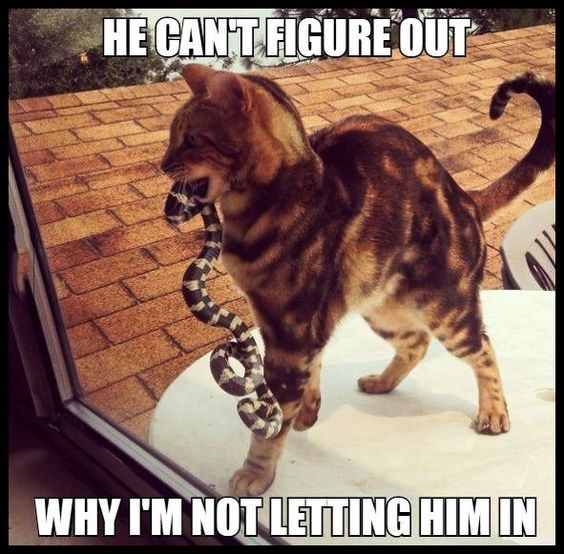 Cat - HE CANTFIGUREOUT WHY I'M NOT LETING HIM IN