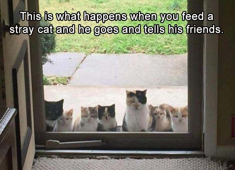 Cat - This is what happens when you feed a stray cat and he goes and tells his friends.