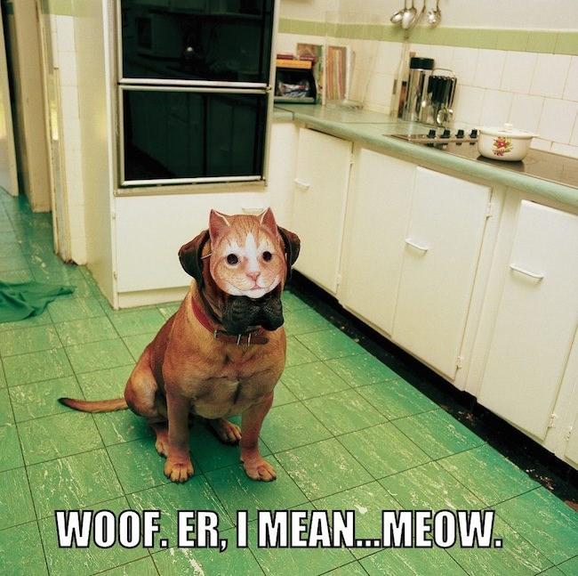 Dog - WOOF ER, I MEAN...MEOW