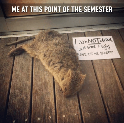 end of semester university student university relatable memes university student problems college students college student problems college memes college finals hang in there finals week final exams - 9164642304