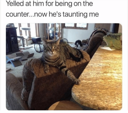 Picture of a cat taunting its human by putting its paw on the counter