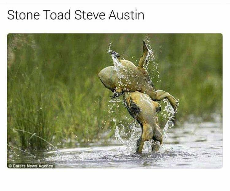 pun - Water - Stone Toad Steve Austin OCaters News Agency