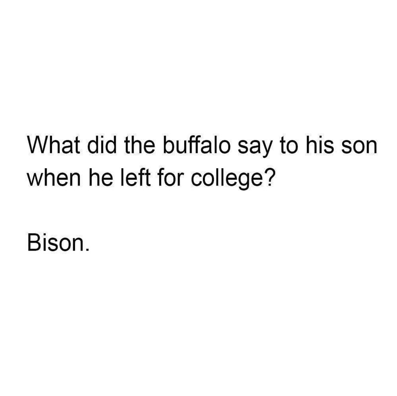pun - Text - What did the buffalo say to his son when he left for college? Bison