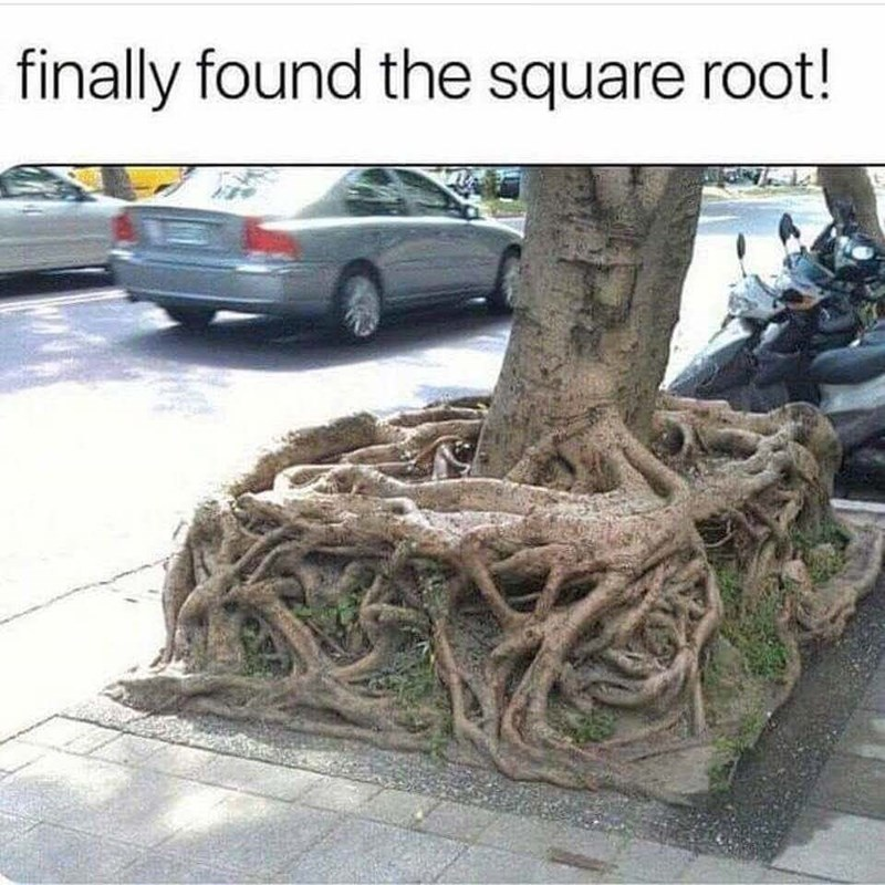 pun - Tree - finally found the square root!