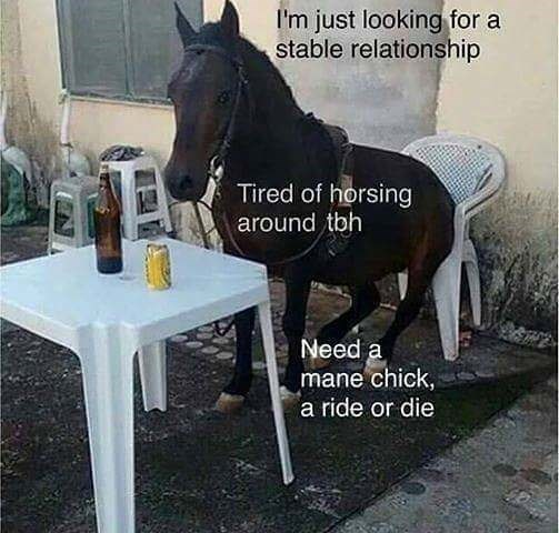 pun - Horse - I'm just looking for a stable relationship Tired of horsing around tbh Need a mane chick, a ride or die