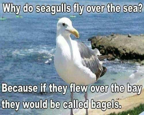 pun - Bird - Why do seagulls fly over the sea? Because if they flew over the bay they would be called bagels.