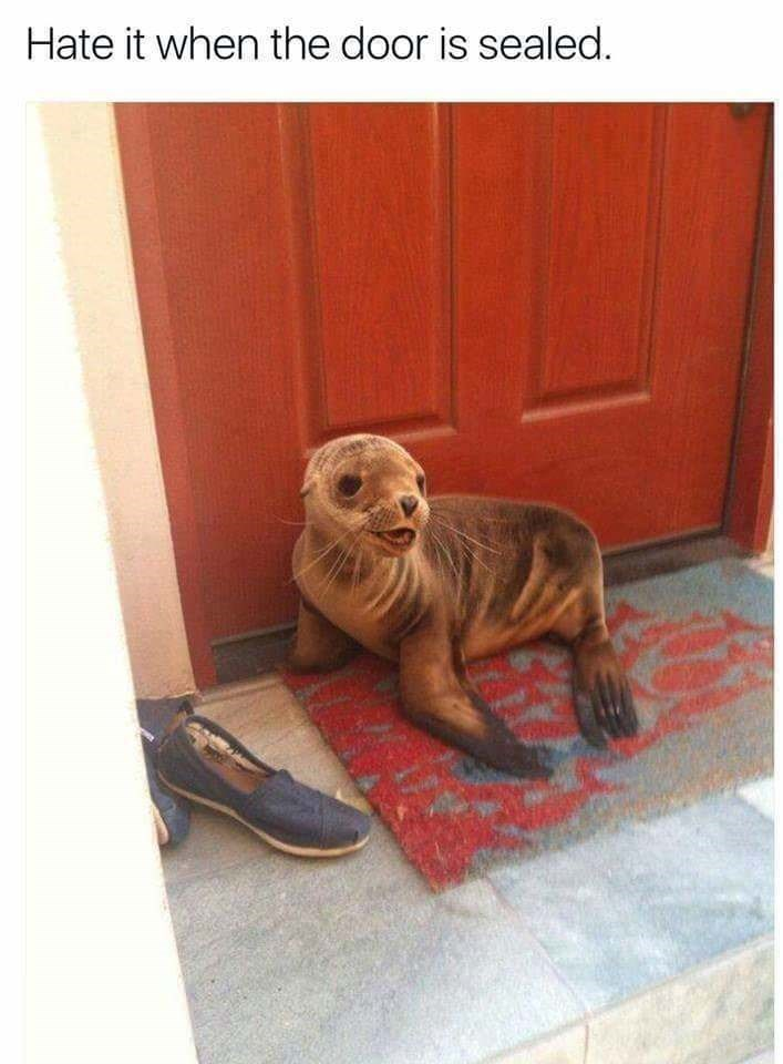 pun - Dog - Hate it when the door is sealed.