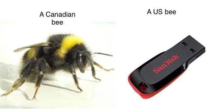 pun - Insect - A Canadian bee A US bee Saisk
