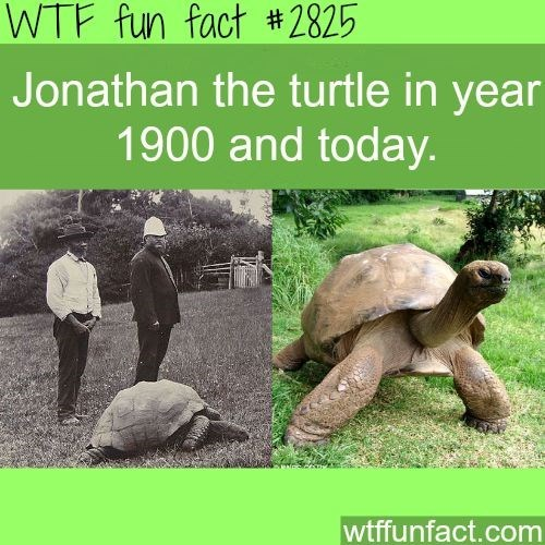 Tortoise - WTF fun fact #2825 Jonathan the turtle in year 1900 and today. wtffunfact.com
