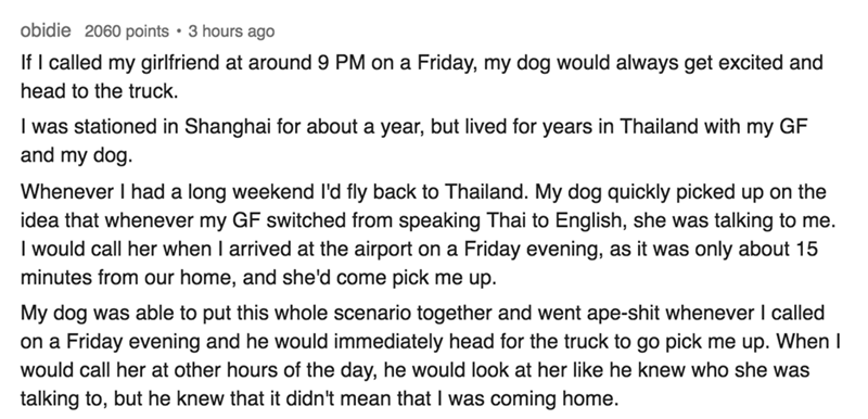 Text - obidie 2060 points 3 hours ago If I called my girlfriend at around 9 PM on a Friday, my dog would always get excited and head to the truck. I was stationed in Shanghai for about a year, but lived for years in Thailand with my GF and my dog Whenever I had a long weekend l'd fly back to Thailand. My dog quickly picked up on the idea that whenever my GF switched from speaking Thai to English, she was talking to me. I would call her when I arrived at the airport on a minutes from our home, an