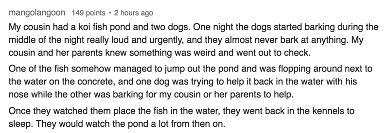 Text - mangolangoon 149 points 2 hours ago My cousin had a koi fish pond and two dogs. One night the dogs started barking during the middle of the night really loud and urgently, and they almost never bark at anything. My cousin and her parents knew something was weird and went out to check. One of the fish somehow managed to jump out the pond and was flopping around next to the water on the concrete, and one dog was trying to help it back in the water with his nose while the other was barking f