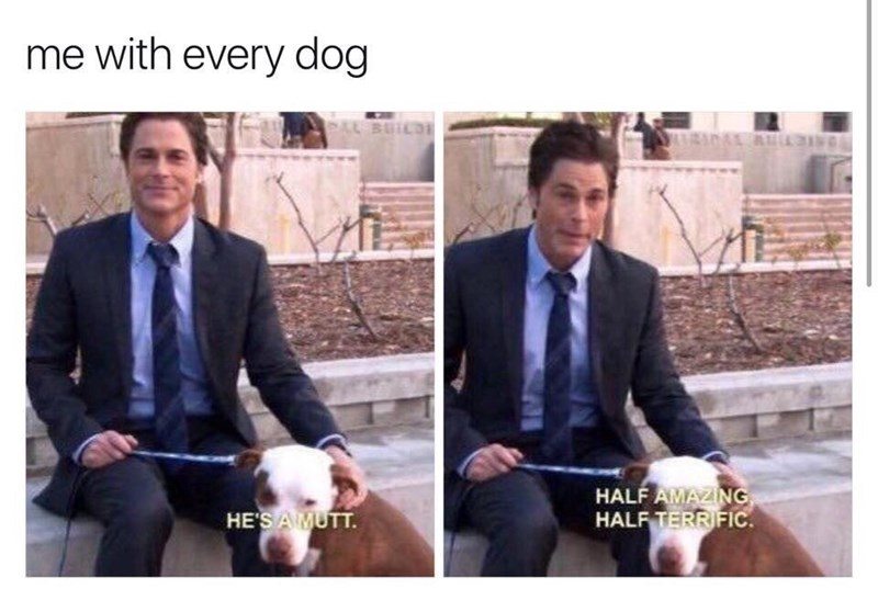 wholesome meme - Suit - me with every dog HALF AMAZING HALF TERRIFIC. HE'SAMUTT