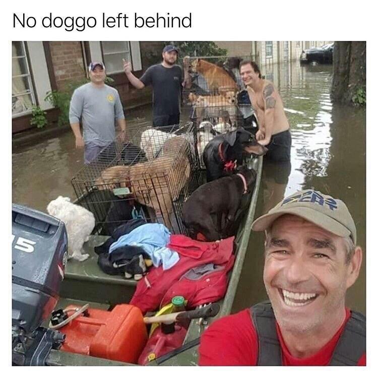 wholesome meme - Selfie - No doggo left behind