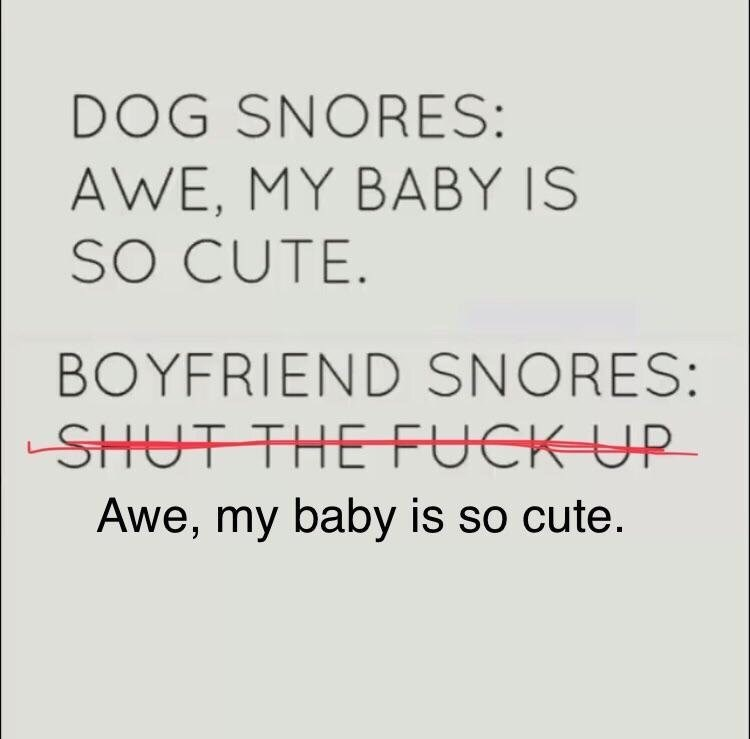 wholesome meme - Text - DOG SNORES: AWE, MY BABY IS SO CUTE. BOYFRIEND SNORES: SHUT THEFUCK UP Awe, my baby is so cute.