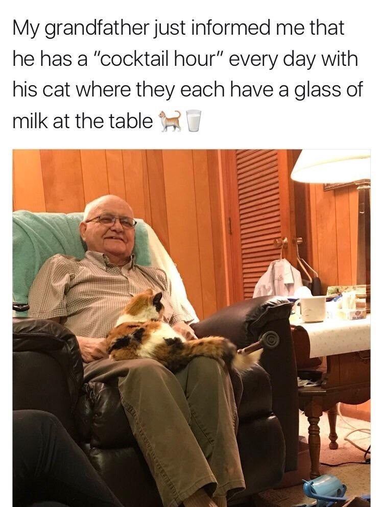 """wholesome meme - Human - My grandfather just informed me that he has a """"cocktail hour"""" every day with his cat where they each have a glass of milk at the table"""