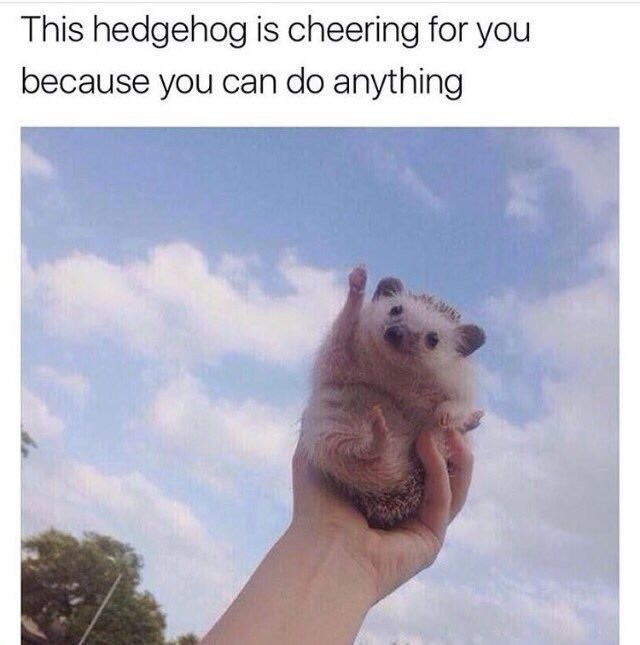 wholesome meme - Sky - This hedgehog is cheering for you because you can do anything