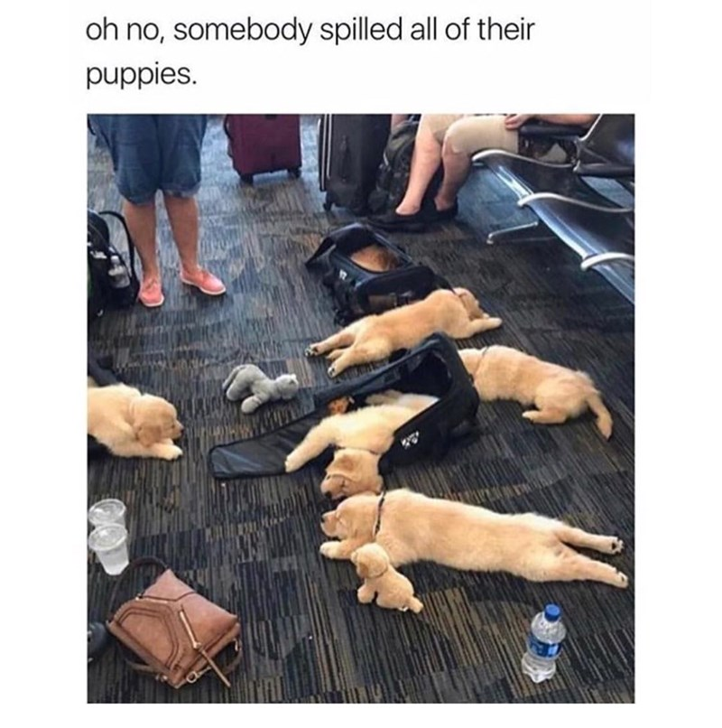 Photo of a bunch of puppies on the floor in an airport