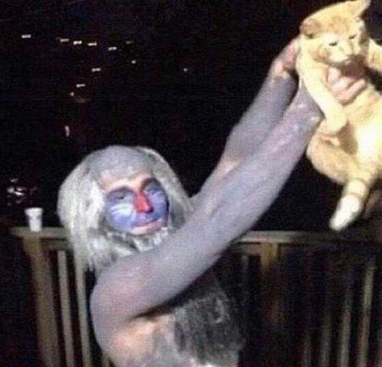 cursed image - creepy simba scene with a cat