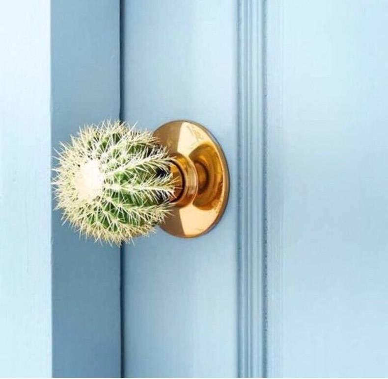 memes - Door handle cactus