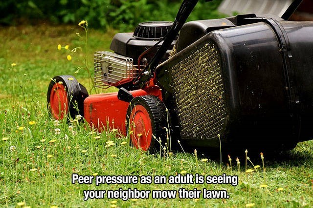 Lawn - Peer pressure as an adult is seeing your neighbor mow their lawn