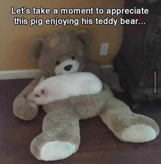Stuffed toy - Let's take a moment to appreciate this pig enjoying his teddy bea... DAILYLOLF PICS.COM