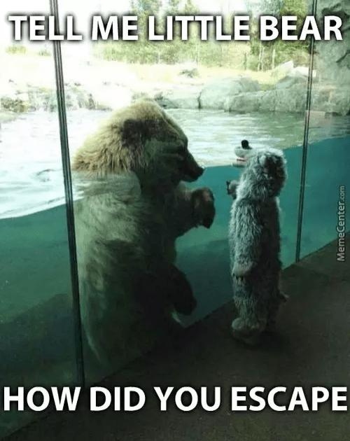 Dog - TELL ME LITTLE BEAR HOW DID YOU ESCAPE MemeCenter.com