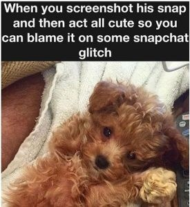 Dog - When you screenshot his snap and then act all cute so you can blame it on some snapchat glitch