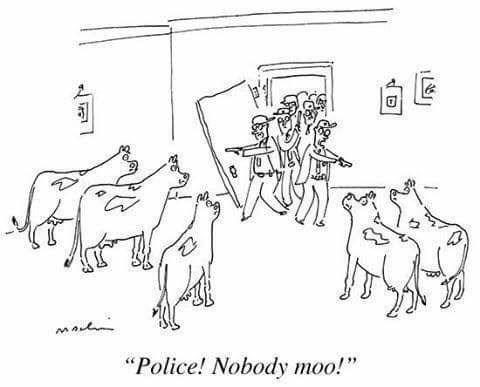 """White - """"Police! Nobody moo!"""""""
