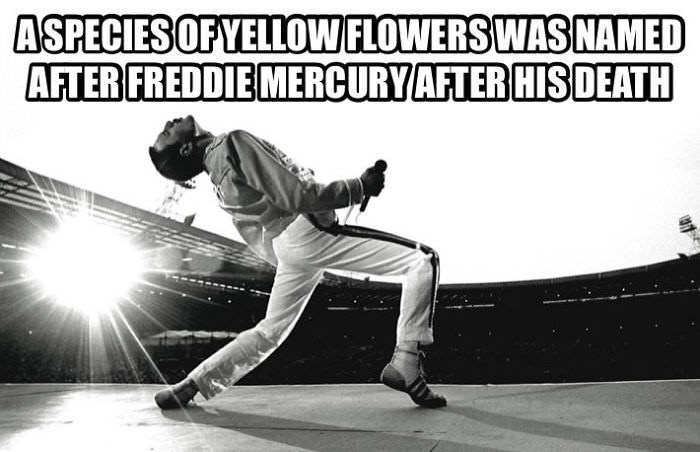 Sports - ASPECIES OF YELLOWFLOWERS WAS NAMED AFTER FREDDIE MERCURY AFTER HISDEATH