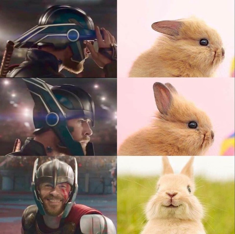 Rabbit compared to thor