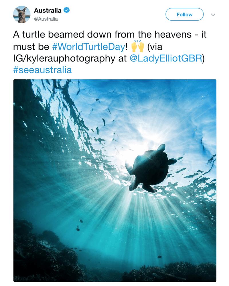 Text - Australia Follow @Australia A turtle beamed down from the heaverns - it must be #WorldTurtleDay! (via IG/kylerauphotography at @LadyElliotGBR) #seeaustralia