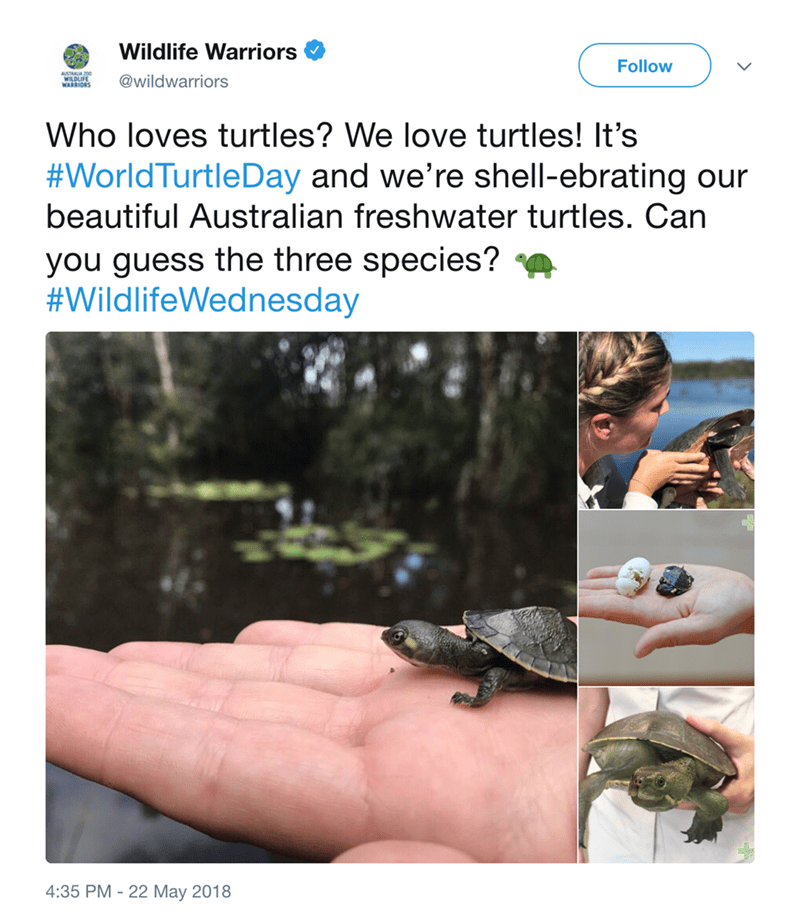 Adaptation - Wildlife Warriors Follow AUSTRALIA200 WILDLIFE WARRIORS @wildwarriors Who loves turtles? We love turtles! It's #WorldTurtleDay and we're shell-ebrating our beautiful Australian freshwater turtles. Can you guess the three species?? #WildlifeWednesday 4:35 PM 22 May 2018