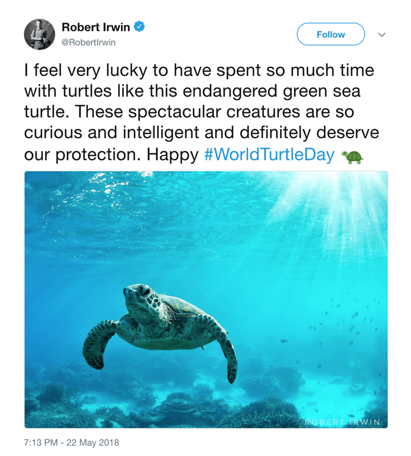 Sea turtle - Robert Irwin Follow @Robertirwin I feel very lucky to have spent so much time with turtles like this endangered green sea turtle. These spectacular creatures are so curious and intelligent and definitely deserve our protection. Happy #WorldTurtleDay ROBERT RWIN 7:13 PM 22 May 2018