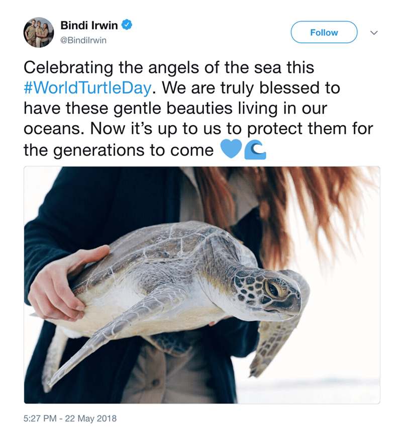 Sea turtle - Bindi Irwin Follow @Bindilrwin Celebrating the angels of the sea this #WorldTurtleDay. We are truly blessed to have these gentle beauties living in our oceans. Now it's up to us to protect them for the generations to come 5:27 PM-22 May 2018