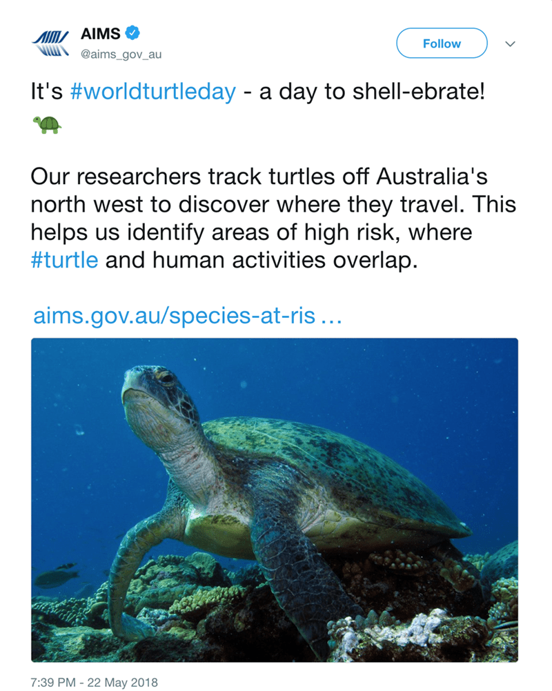Sea turtle - AIMS Follow @aims_gov_au It's #worldturtleday - a day to shell-ebrate! Our researchers track turtles off Australia's north west to discover where they travel. This helps us identify areas of high risk, where #turtle and human activities overlap. aims.gov.au/species-at-ris... 7:39 PM - 22 May 2018