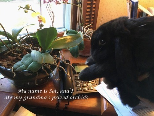 Flower - My name is Søt, and I ate my grandma's prized orchids