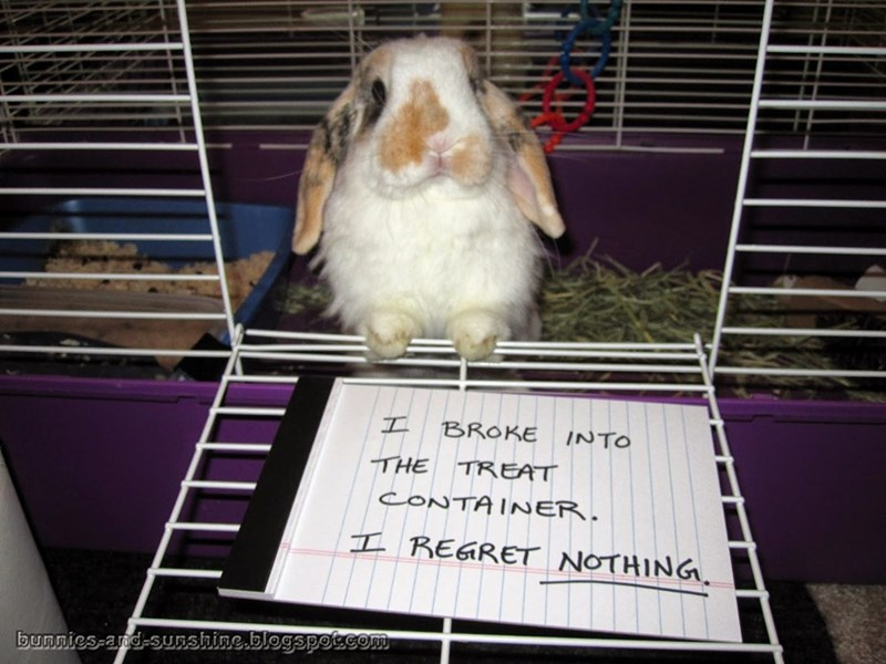 Cage - I BROKE INTO THE TREAT CONTAINER. I REARET NOTHING bunnies-and-sunshine.blegspoccom