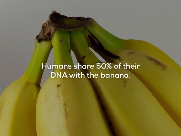 meme - Banana family - Humans share 50% of their DNA with the banana.